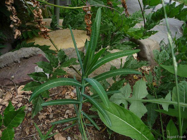 20.06.2011 - Im eigenen Garten