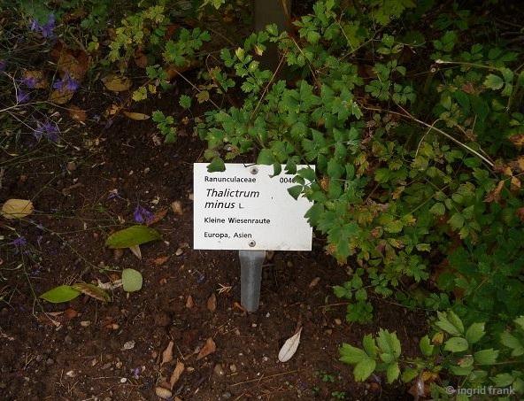 15.09.2017 - Botanischer Garten Universität Heidelberg