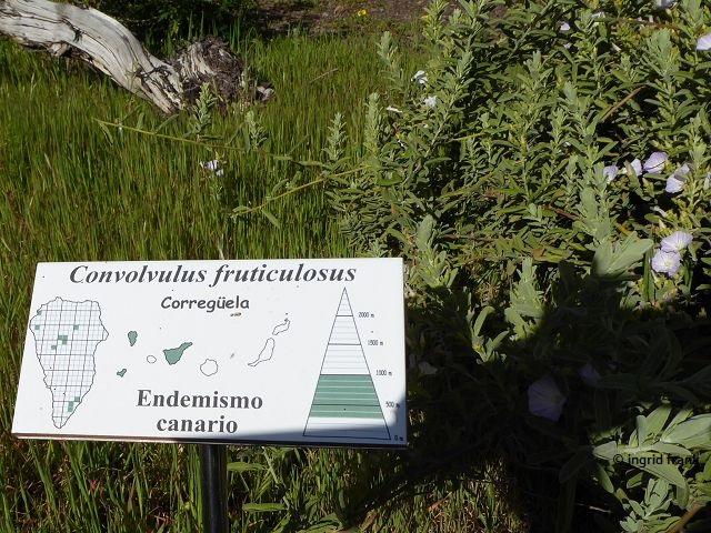 18.02.2018 - Im Botanischen Garten des Besucherzentrums des Nationalparks Caldera de Taburiente, El Paso, La Palma