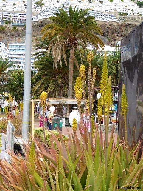 21.02.2020 - Gran Canaria, Puerto Rico