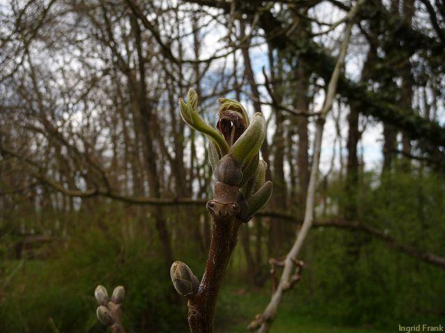 04.04.2012 - Im eigenen Garten