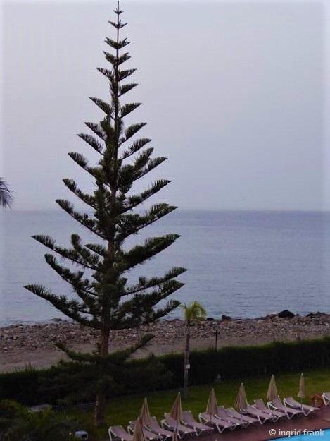 15.02.2020 - Gran Canaria, Playa del Cura