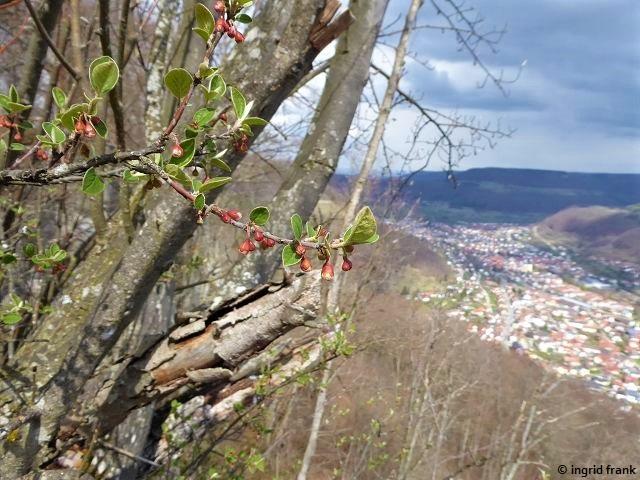 14.04.2021 - Albtrauf bei Schloss Lichtenstein