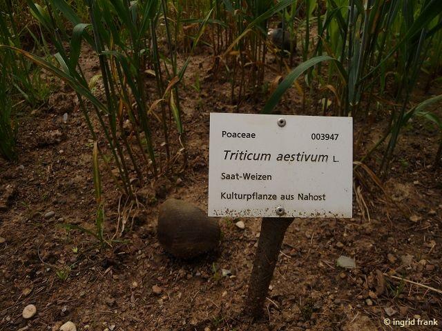 11.06.2017 - Botanischer Garten Universität Heidelberg