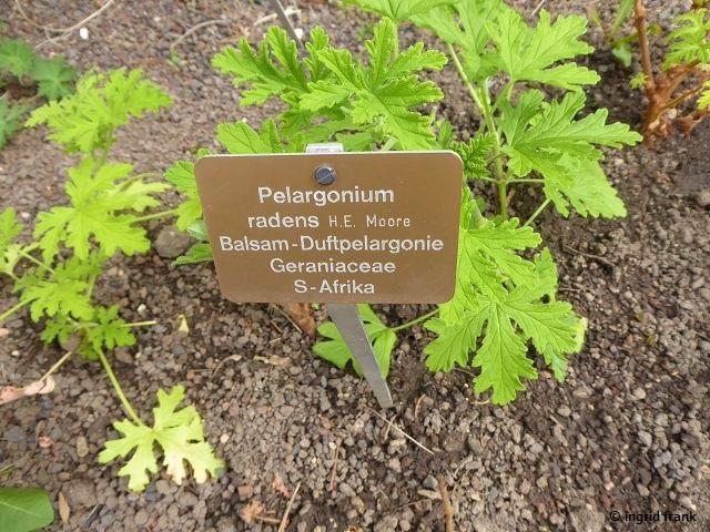 19.04.2019 - Botanischer Garten der Universität Basel