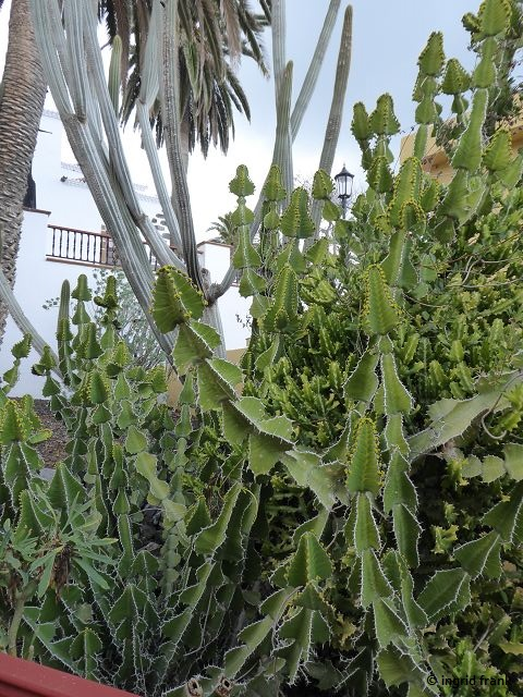20.02.2018 - Garten in San Andrés im Nordosten von La Palma