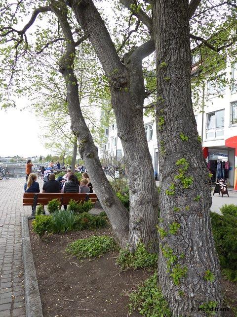 23.04.2019 - Uferpromenade Friedrichshafen