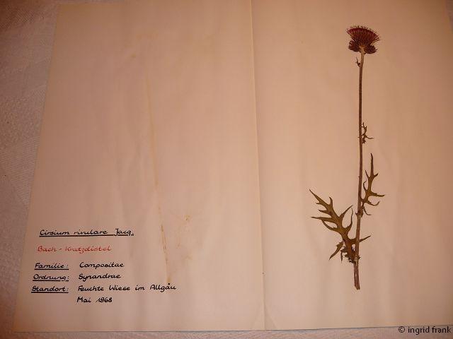 In meinem Herbarium von 1969