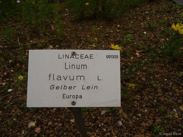 11.06.2016 - Botanischer Garten Universität Heidelberg