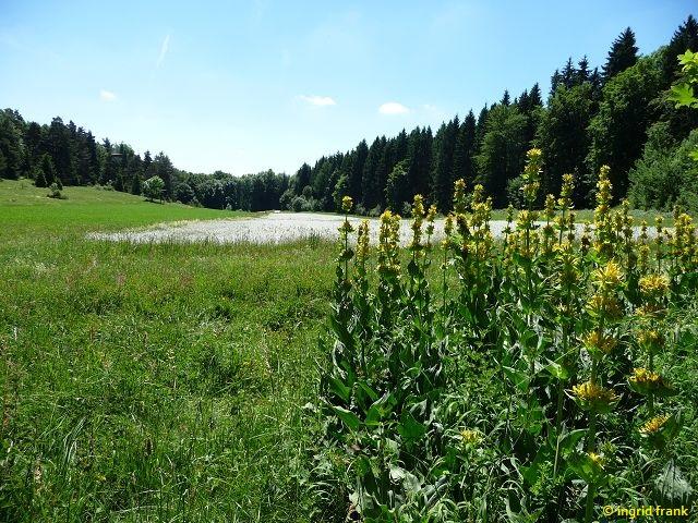 18.06.2017 - Auf der Zollernalb bei Albstadt