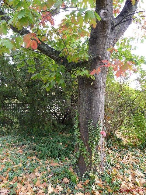 09.10.2017 - Park des Diakonissen-Krankenhauses Speyer