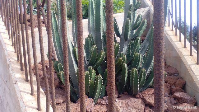 """18.01.2016 - La Gomera, Botanischer Garten beim """"Skywalk"""" nahe Aguro"""