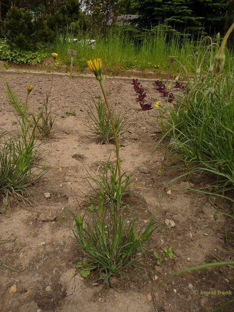 05.05.2014 - Botanischer Garten Berlin