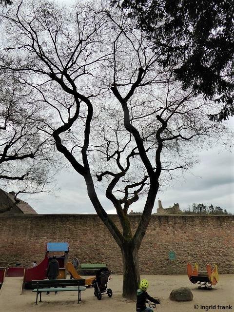 Derselbe Baum ohne Laub am 11.04.2021
