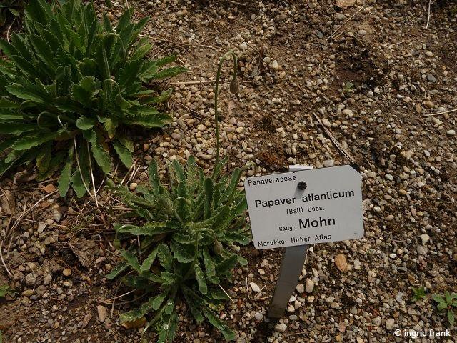 08.05.2015 - Botanischer Garten Dresden