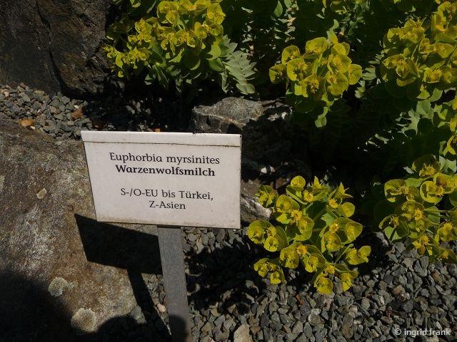 06.05.2016 - Botanischer Garten Adorf im Vogtland