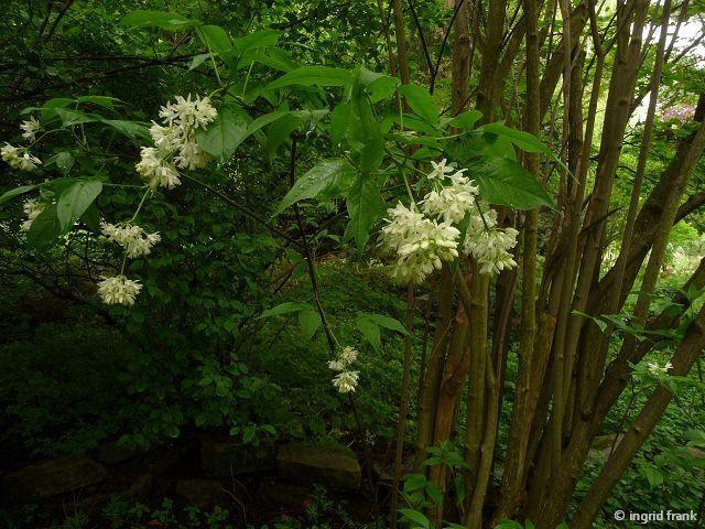 10.05.2013 - Botanischer Erlebnisgarten Altenburg