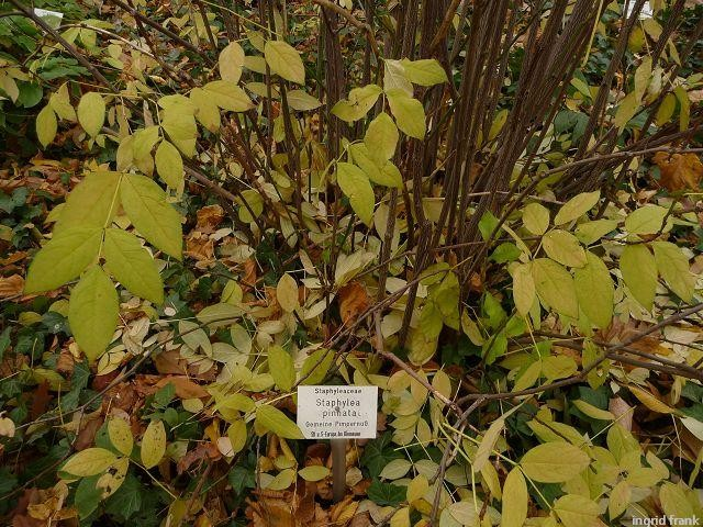 18.11.2011 - Botanischer Garten Leipzig