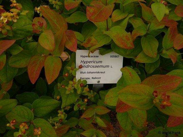 11.06.2016 - Botanischer Garten Heidelberg