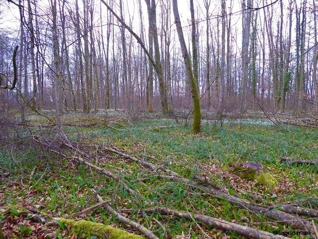 29.02.2020 - Im NSG Oberer Schennkenwald