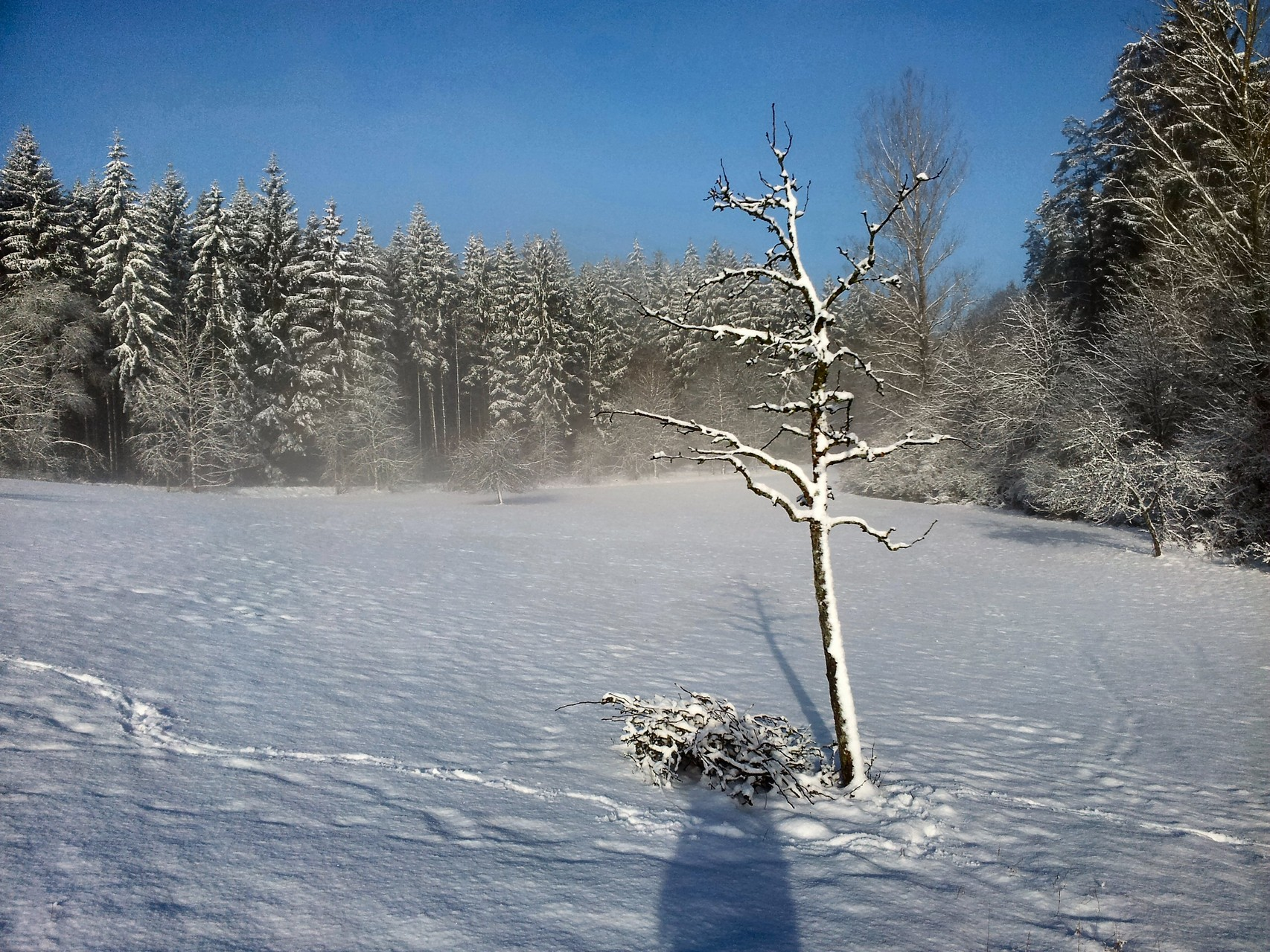 Birne im darauffolgenden Winter Foto: Christian Rudolf