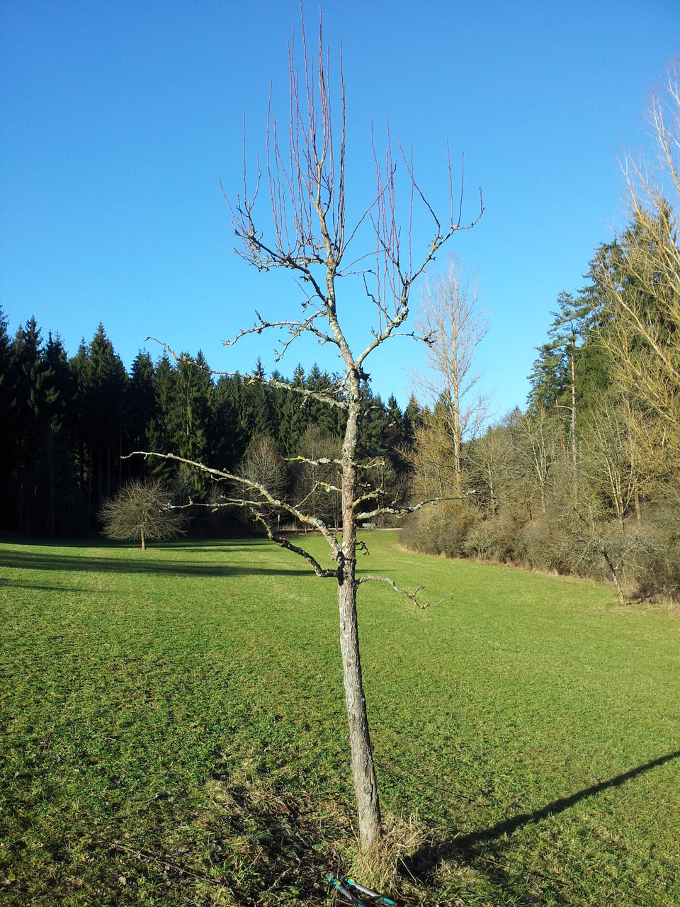 Birne im folgenden Herbst Foto: Christian Rudolf