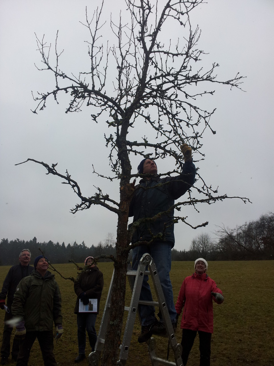 Obstbaumschnittkurs Birne Foto: Christian Rudolf