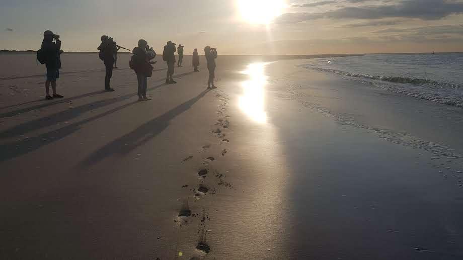 Visite des phoques en baie de Somme
