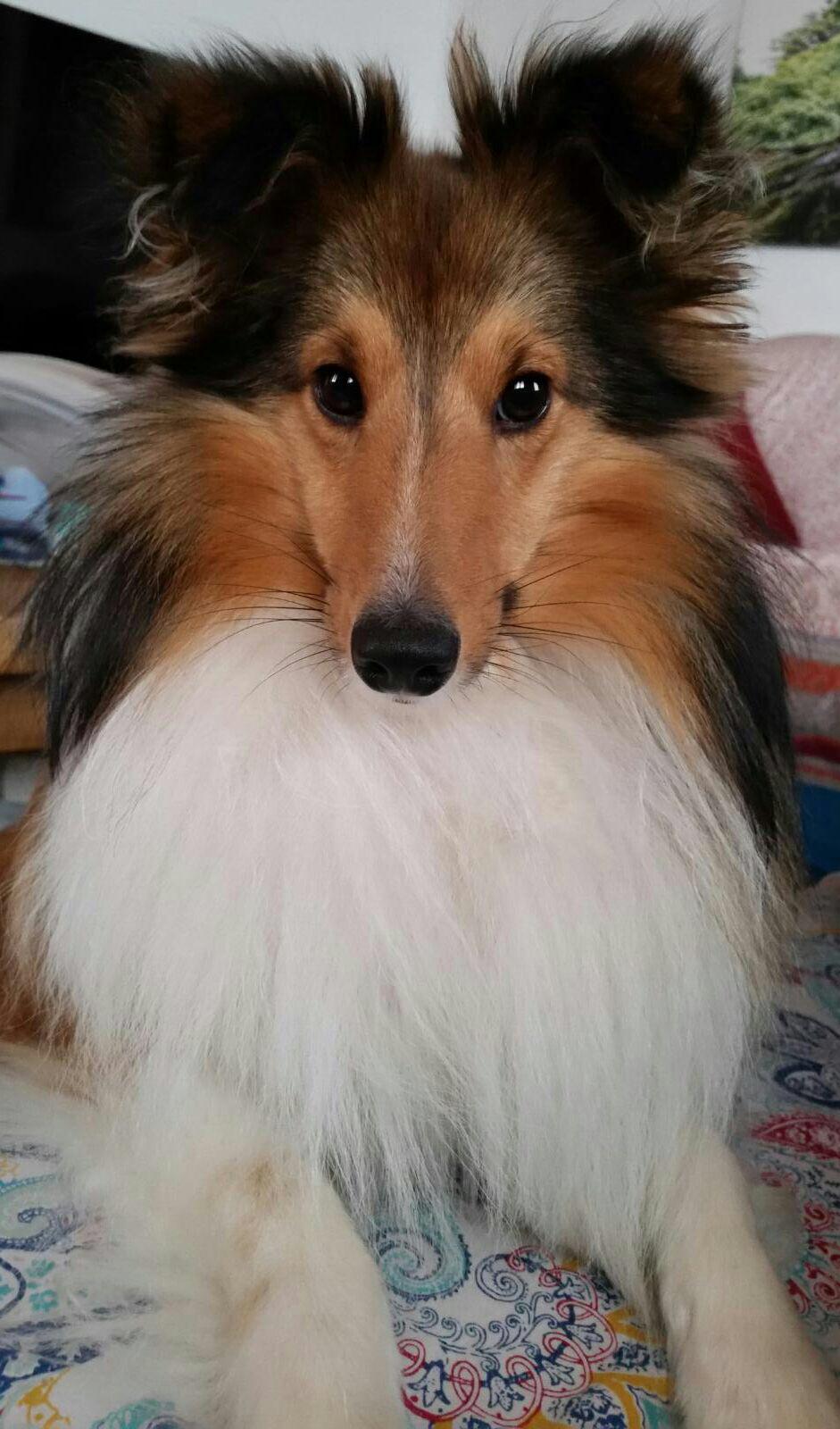 CheekyChopard mit knapp 1,5 Jahren. So ein süßer Blick!
