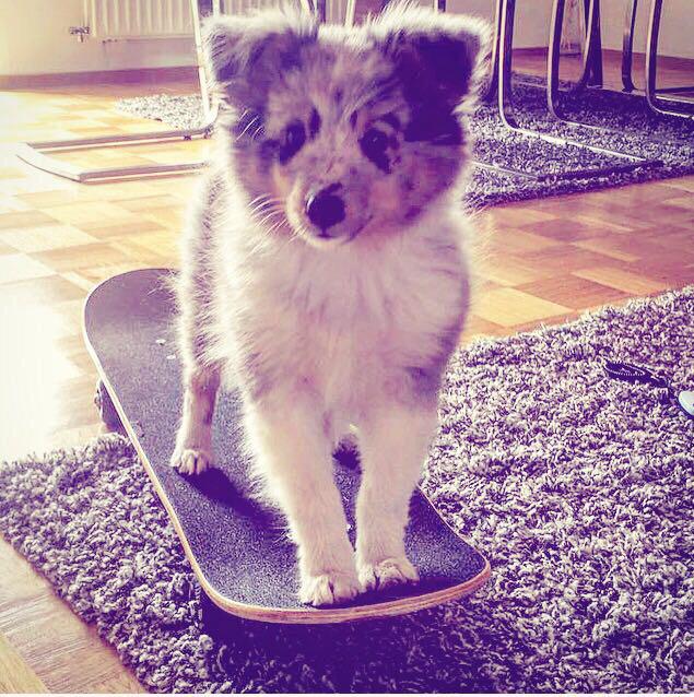 """FuzziFröhlich """"Jack"""" 12 Wochen alt und knapp 26 cm groß"""
