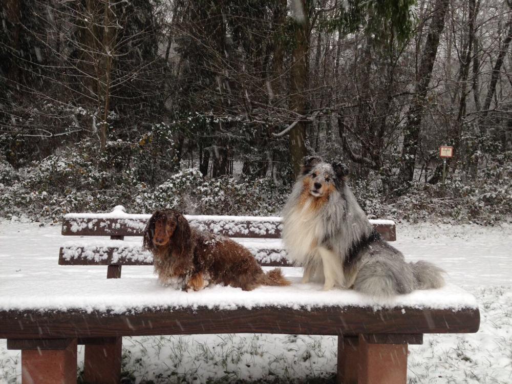 Dezember 2017: Benito mit seinem Freund genießt den ersten Schnee
