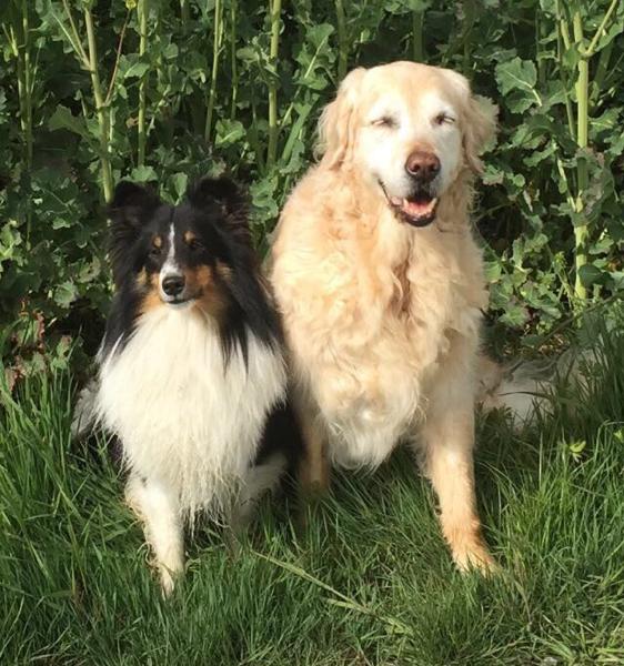 CharlieChaplin mit seiner großen Freundin Adina