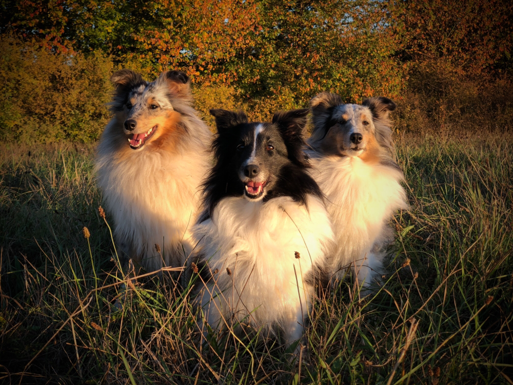 Herbst 2018: EviEngelchen, Oma Ally und BellyButton