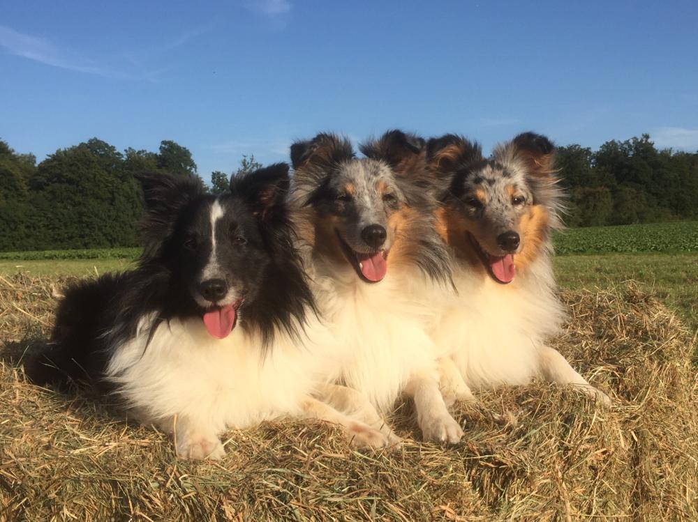 August 2017, Ally, BellyButton und EviEngelchen