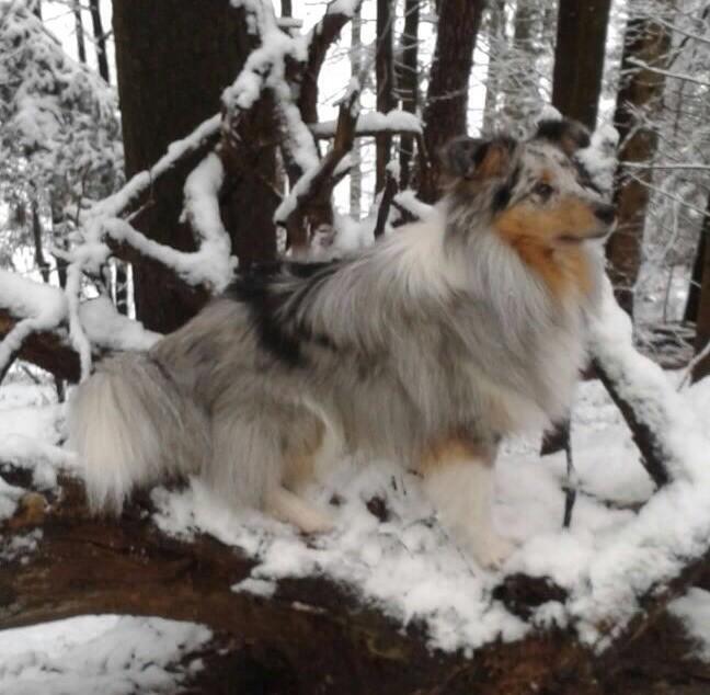 Benito, 11 Monate als Schneehase