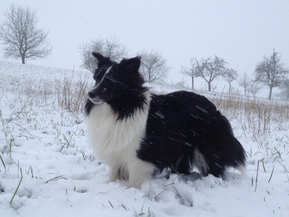 27.12.2014: Der erste Schnee des Winters