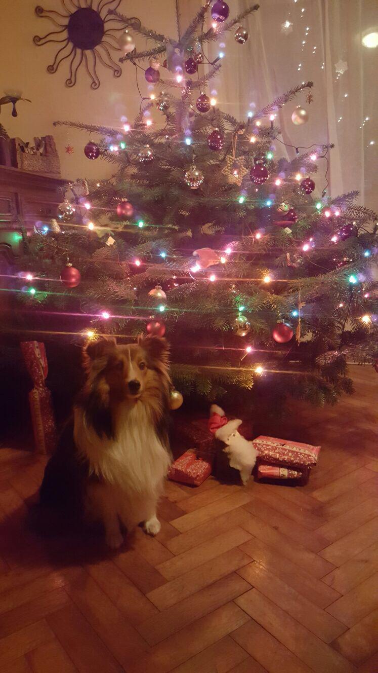 DJDiesel freut sich auf sein erstes Weihnachtsfest