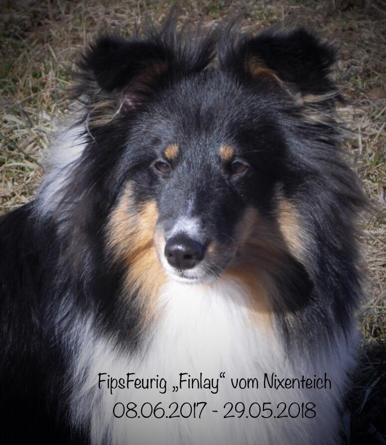 Mir blutet das Herz...  wenige Tage vor seinem 1. Geburtstag wurde Finlay Opfer einer Beißattacke durch einen Schäferhund. Trotz mehrstündiger Not-OP erlag der kleine Mann seinen schweren Verletzungen... Meine Gedanken sind nun auch bei seiner lieben Familie.  RIP mein süßer Bube!