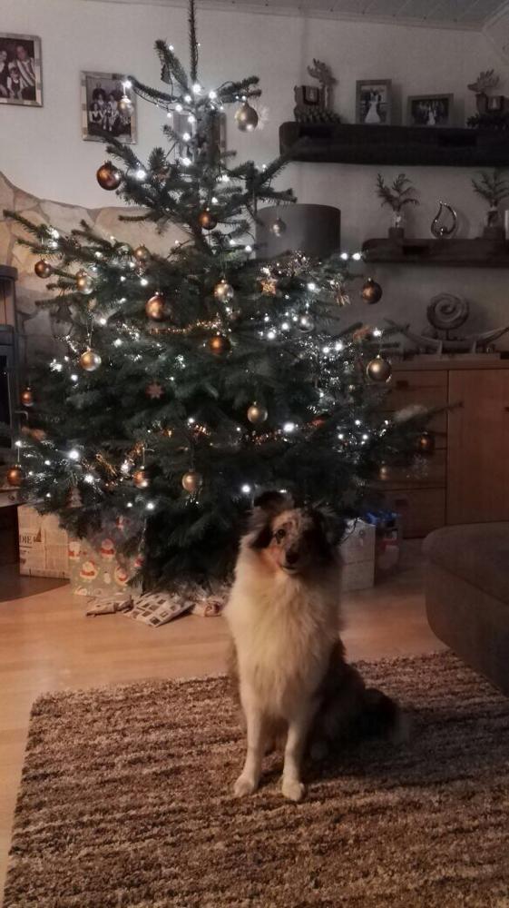 Das erste Weihnachtsfest für den kleinen FusselFino