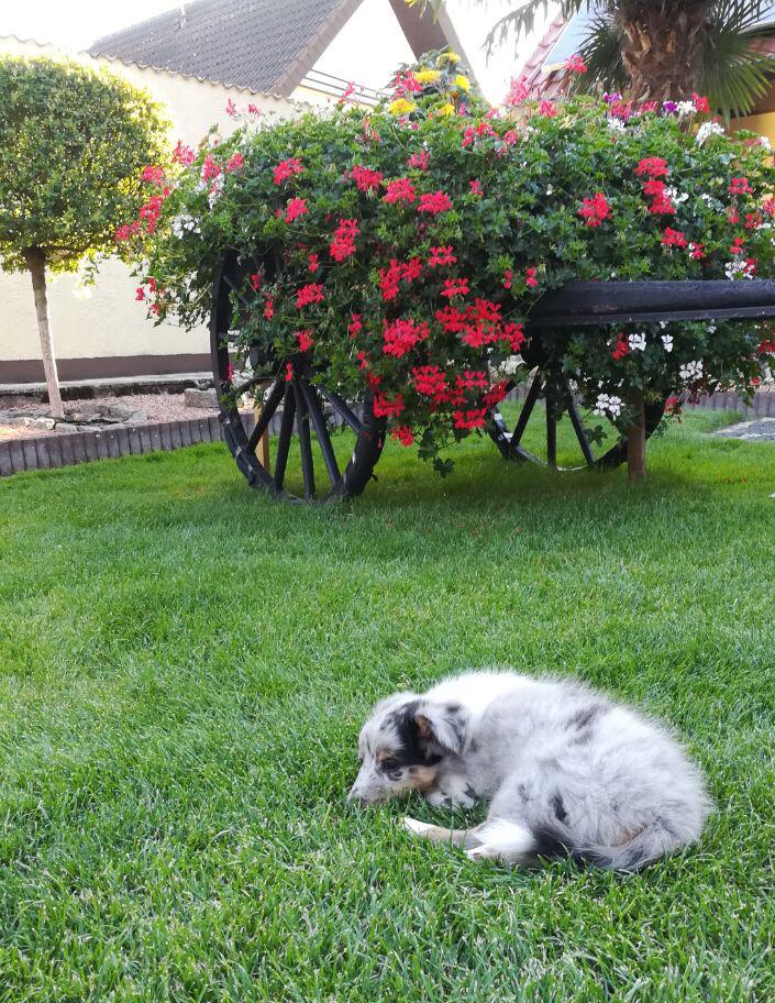 FusselFamos genießt den Garten