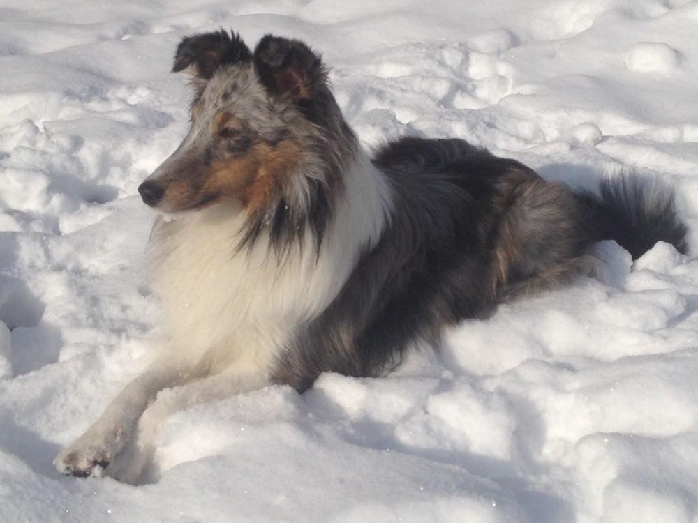 27.12.2014: Belly genießt ihren ersten Schnee