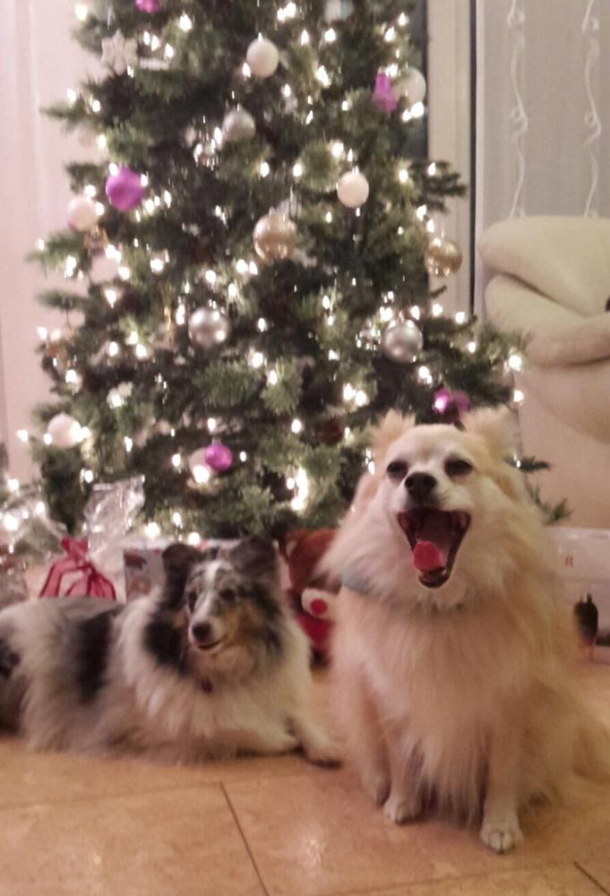 Appletini Weihnachten 2015