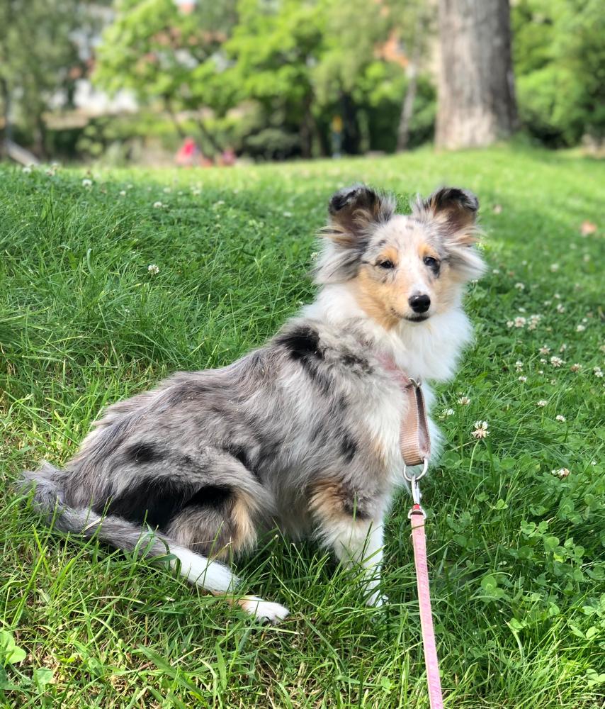 Erster Urlaub für meine kleine GinieGlückskeks im bayrischen Wald. Sie ist nun 24 Wochen alt bei 32,5 cm und 4750 Gramm