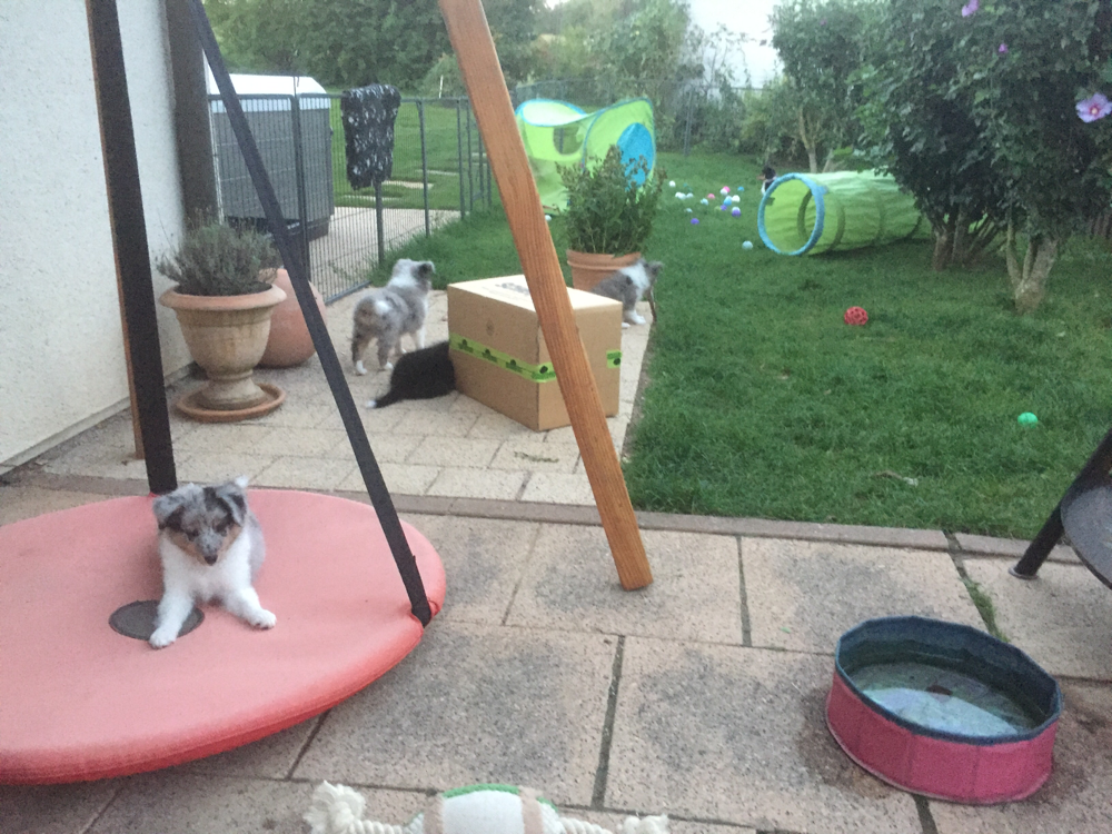 Welpenauslauf im Garten und Terrasse