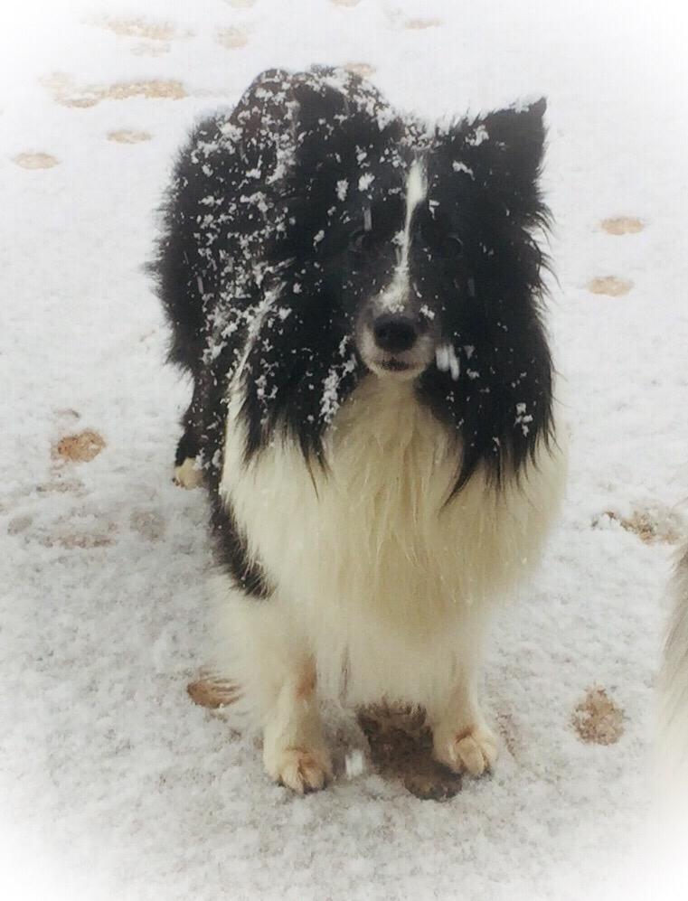 Ally als Schneemännchen im Januar 2018