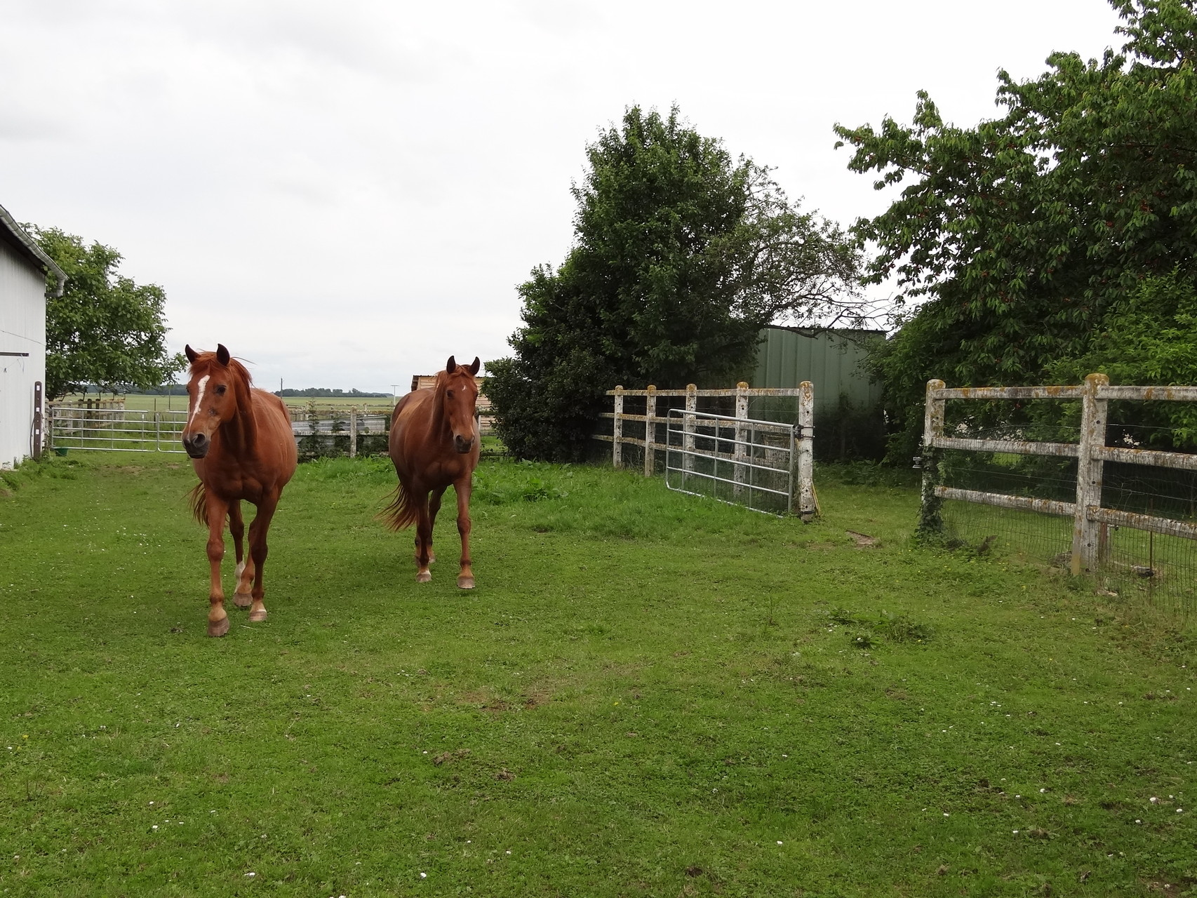 Mes chevaux : Evaric et Jessie