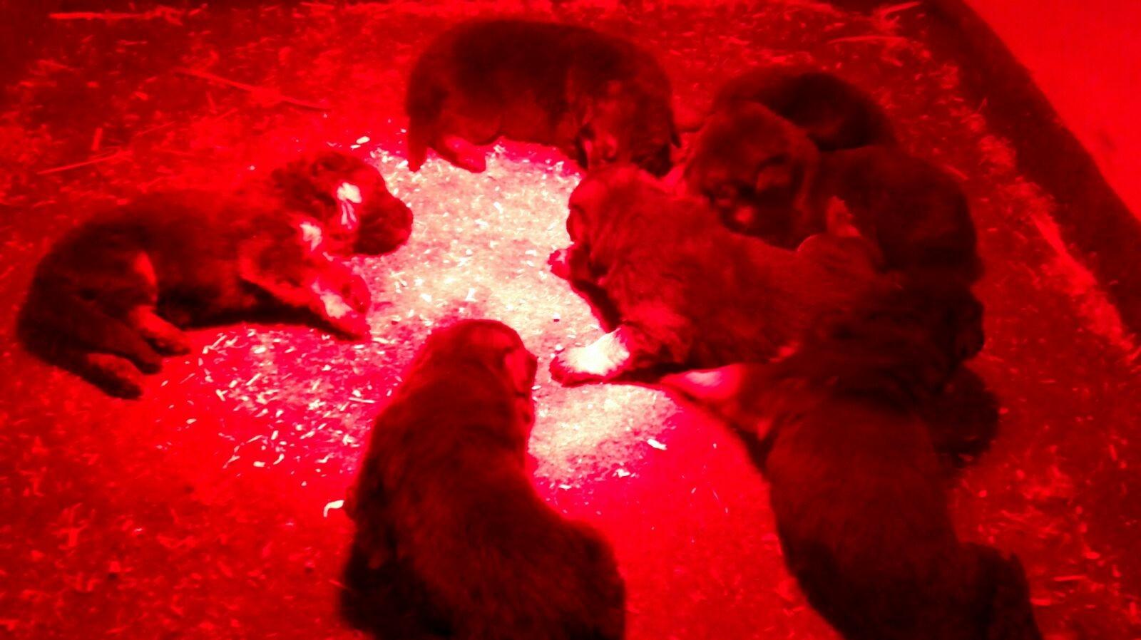 Kuscheln unterm Rotlicht