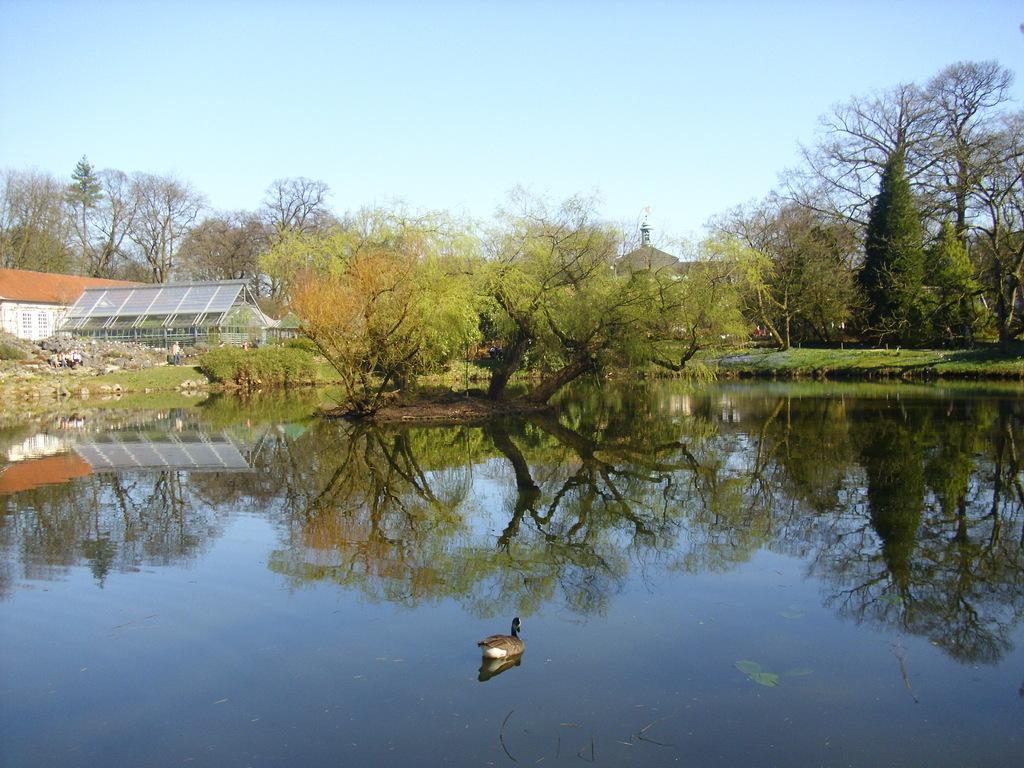 Teich im Botanischen Garten, WK