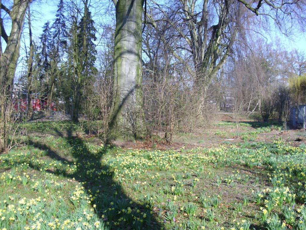 Frühling im Sentmaringer Park Foto: WK