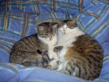 Sylvester(Tochter) und Sunny(Mutter). Sylvester ist leider viel zu früh mit kanpp 12 Jahren am 17.04.2016 verstorben, Sunny wurde 20 Jahre alt und ist am 27.06.2020 gestorben.